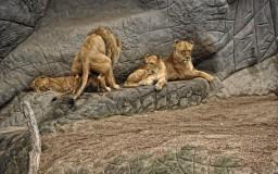 Löwenspaß